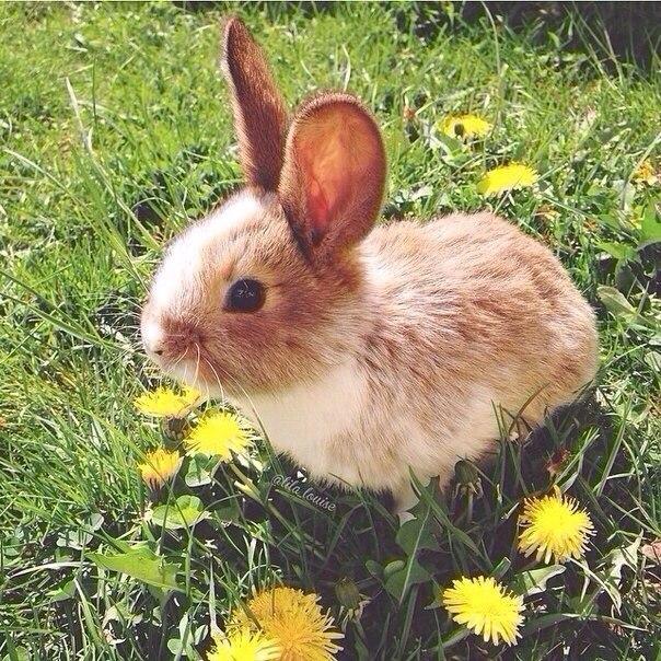 Кролик стучит задними лапами