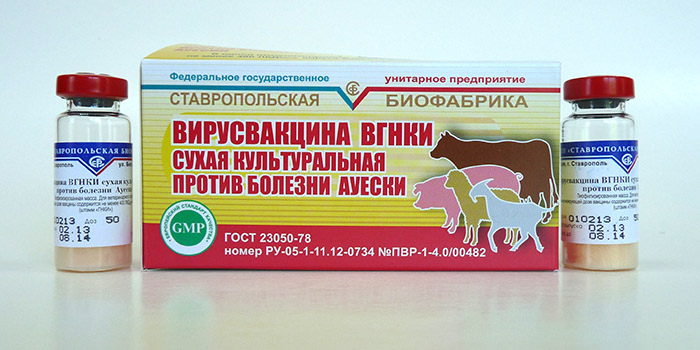 Классическая чума свиней: причины, лечение