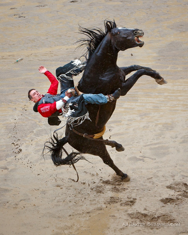 Лошадь встает на дыбы