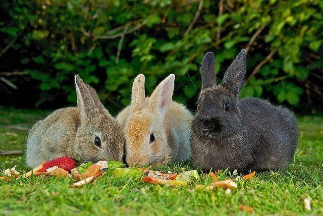 Витамины для кроликов — что нужно для здорового роста?