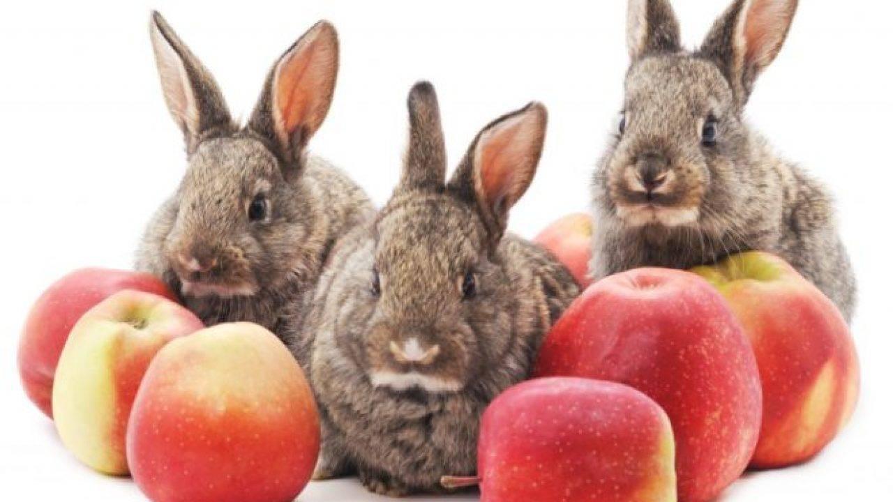 Можно ли давать кроликам петрушку и укроп: правила и нормы кормления