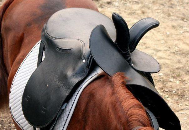 Седло для лошади: виды (женское, казачье, конкурное, скаковое, универсальное), строение, как сделать своими руками