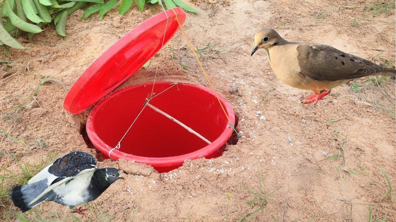 Как поймать фазана?