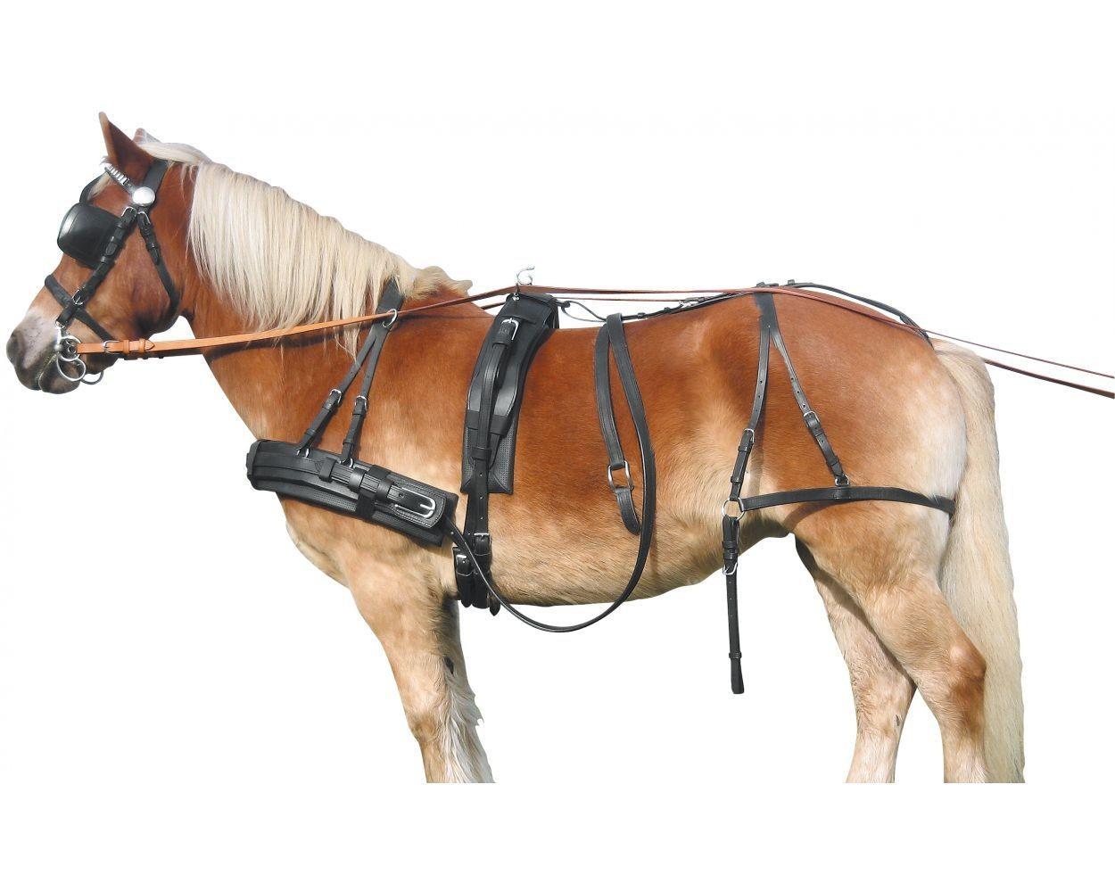 Как запрячь коня: элементы упряжи и правила запряжки