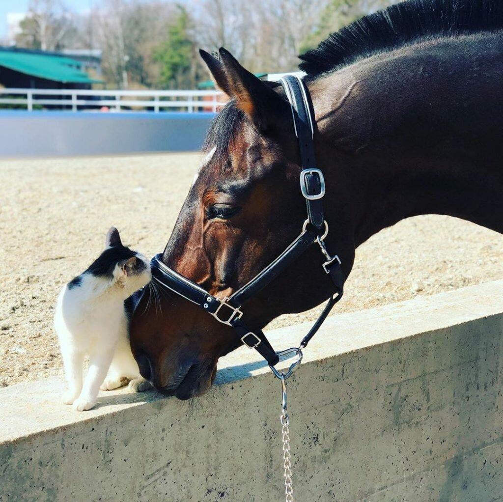 Дрессировка лошадей - horse training - qwe.wiki
