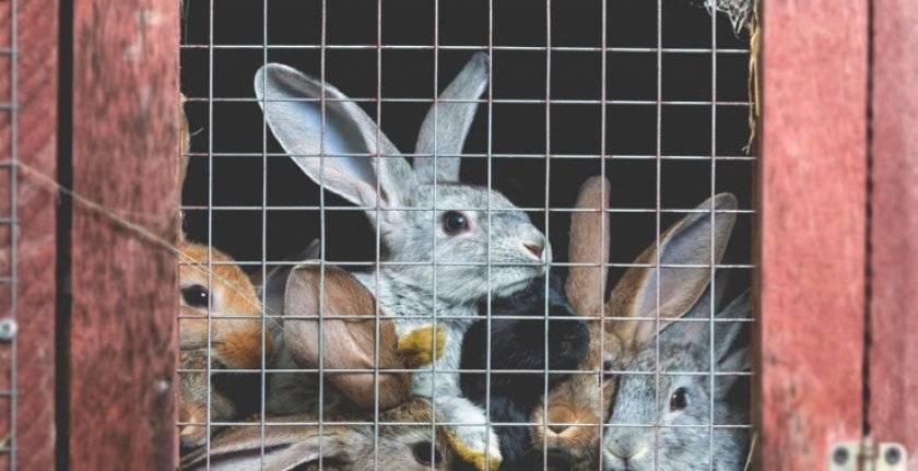 Как содержать кроликов, виды разведения в клетках и на воле, видео