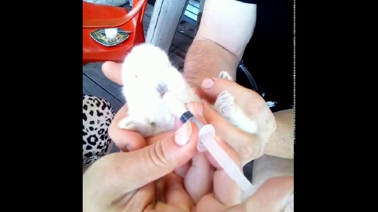 Как выкормить крольчат без крольчихи с первых дней жизни: искуственное кормление новорожденных кроликов