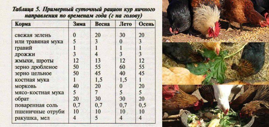 Советы по выбору комбикорма для кур: плюсы и состав, как выбрать комбикорм для несушек, корм своими руками