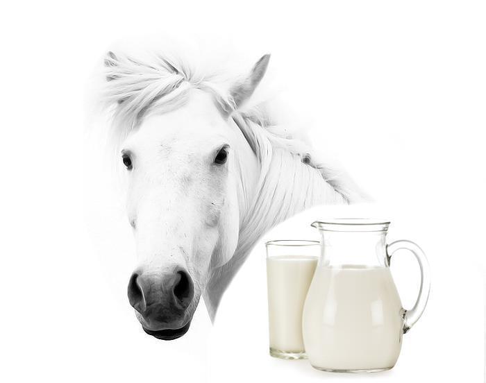 Молочная продуктивность лошадей