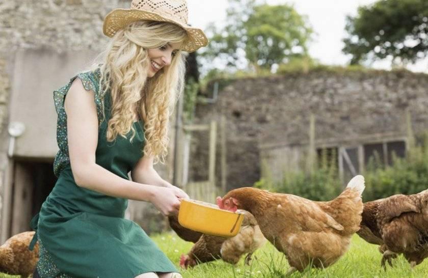 В каком виде давать крапиву курице несушке: можно ли кормить, заготовка на зиму