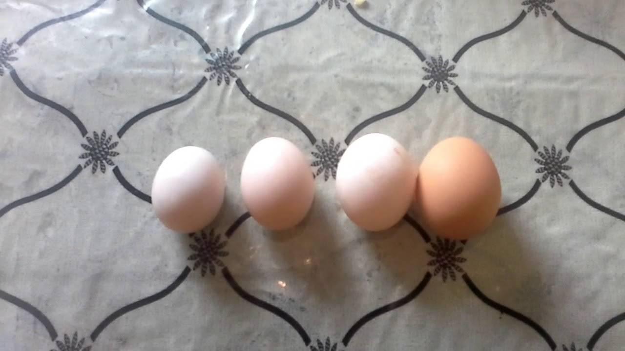 Куры клюют яйца: основные причины. что делать, если куры-несушки едят свои яйца? как решить проблему с помощью народных средств?