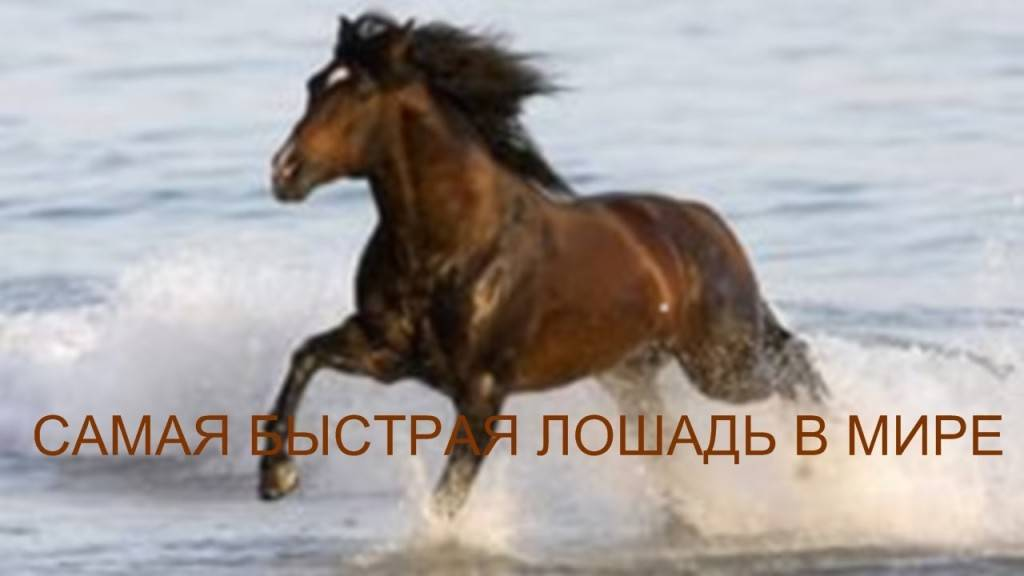 Какие лошади самые быстрые в мире?