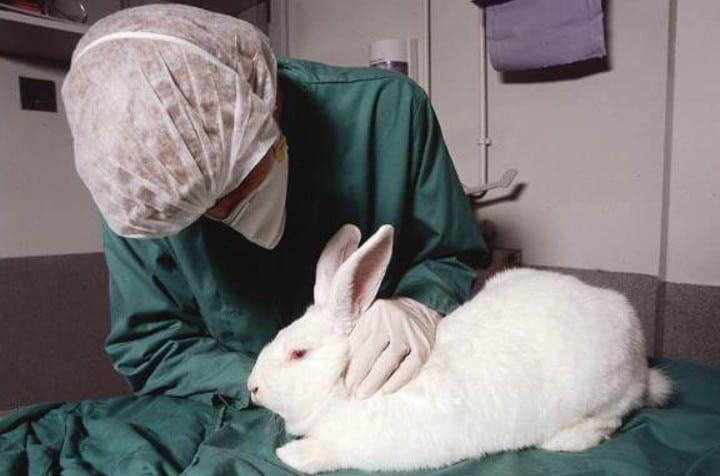 Дегельминтизация кроликов в домашних условиях и для начинающих