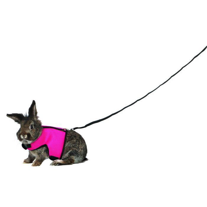 Делаем поводок или шлейку для кролика самостоятельно