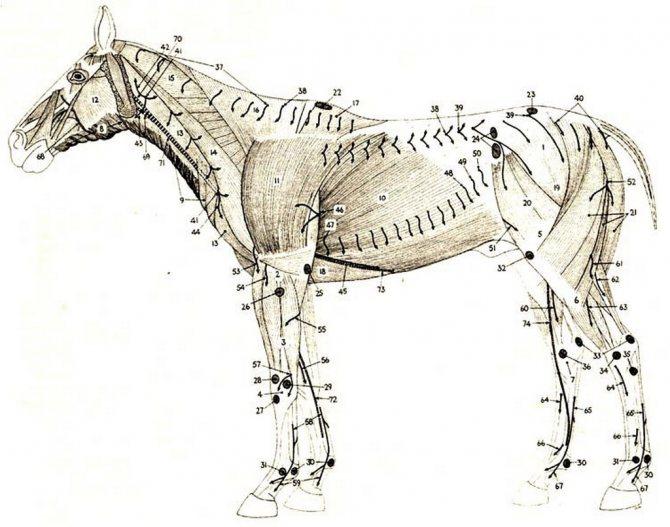 Приснилась морда лошади. к чему снится приснилась морда лошади
