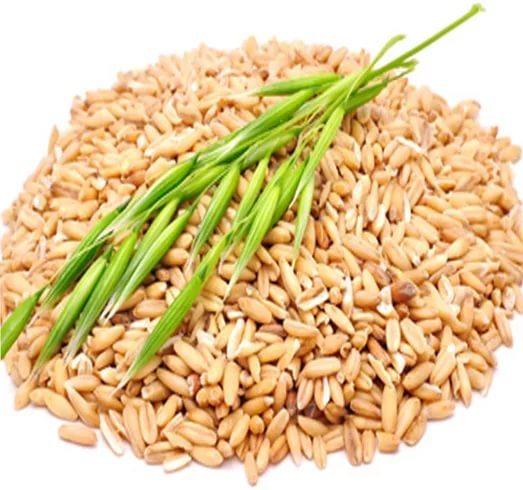 Чем кормить кур: трава которую можно и нельзя давать птице, кормление хлебными изделиями