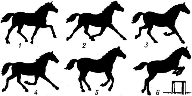 Какие существуют виды бега лошади? 2020