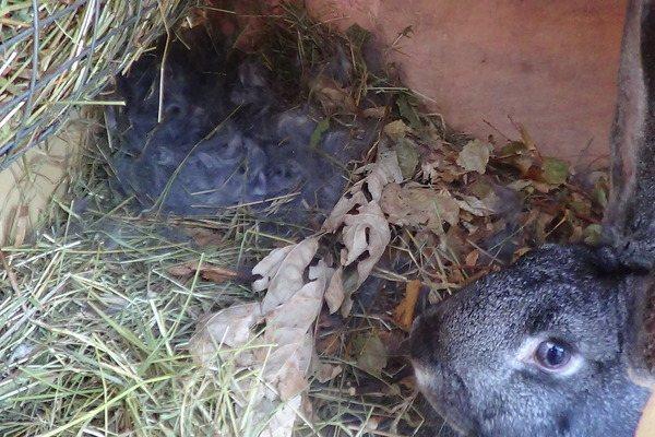 Почему болеют и дохнут кролики: симптомы, причины и заболевания, что делать и как лечить