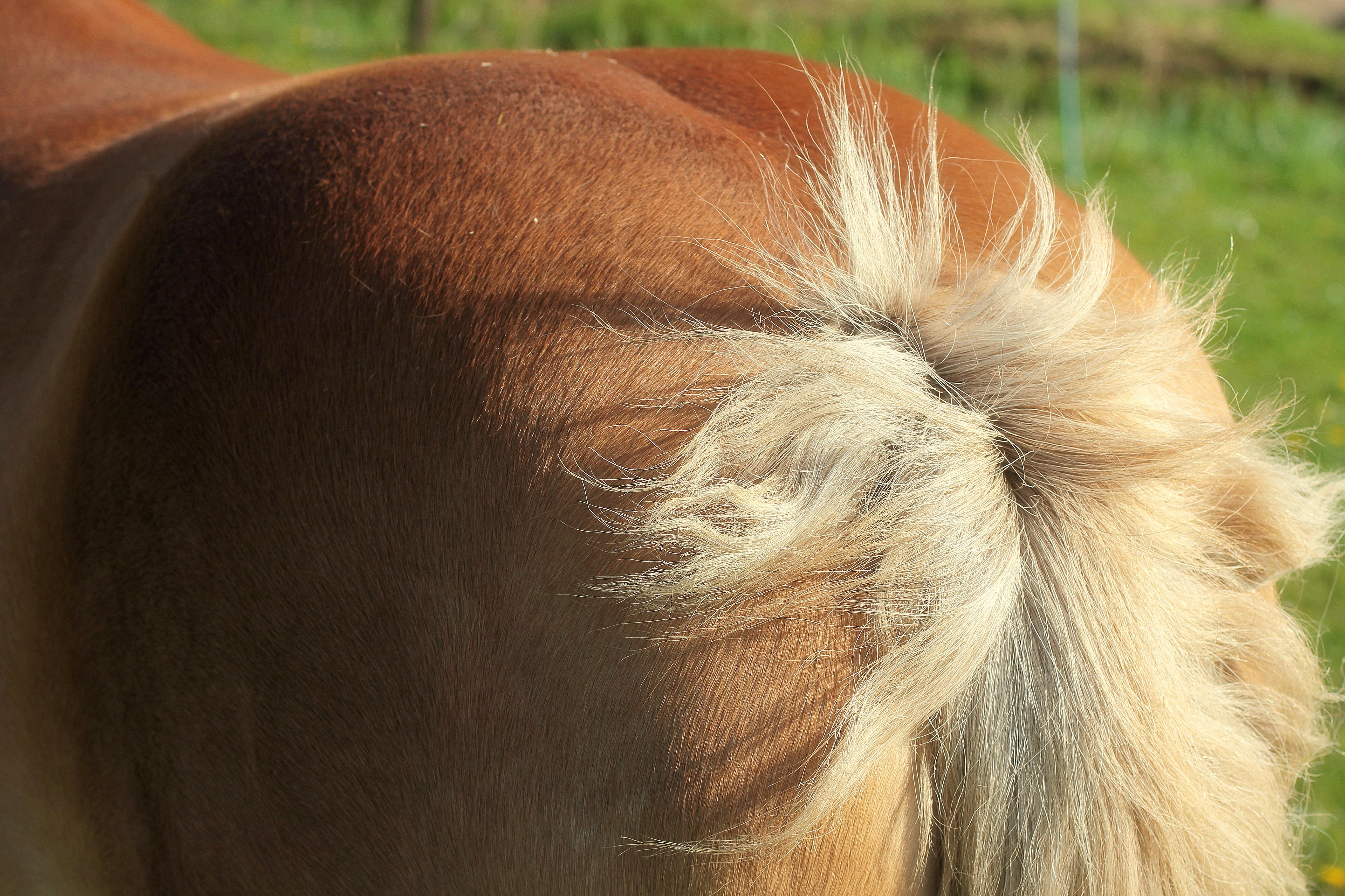 ᐉ самая сильная лошадь в мире, самый мощный конь - zooshop-76.ru