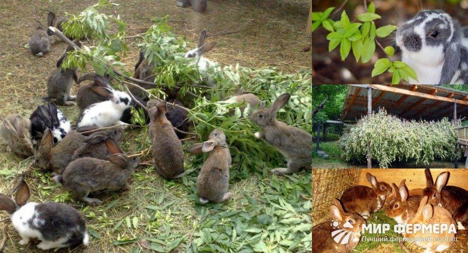 Какие ветки деревьев можно давать кроликам: веточный корм и ест ли вишню и акацию? - naz74.ru