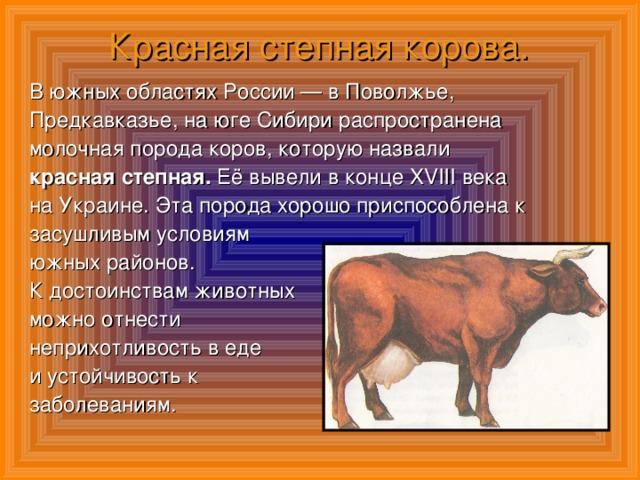 Красная степная порода коров: характеристика, уход и кормление