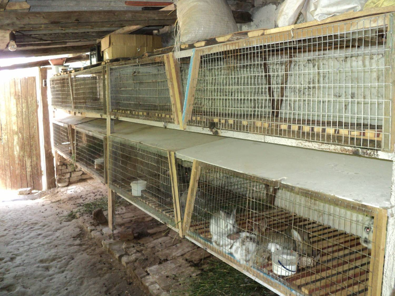Размеры клетки для кроликов - клетки для кроликов | описание, советы, отзывы, фото и видео