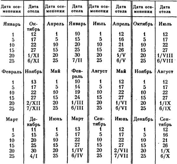 Отёл коровы — признаки, календарь, таблица, запуск, раздой