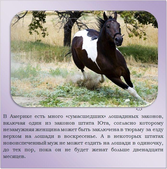 Особенности лошади и уход за ней