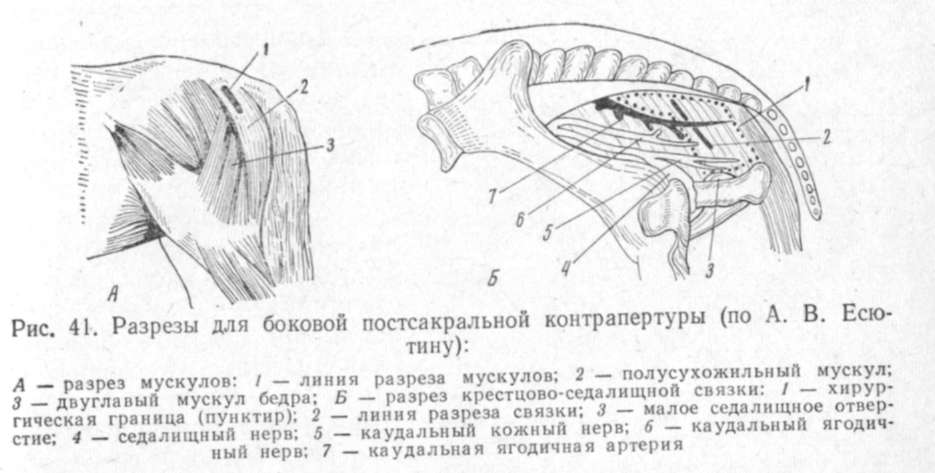 Шишка (на подбородке, щеке, шее, животе, в ухе, под глазом) у кролика: опухоль, абсцесс, флюс, миксоматоз