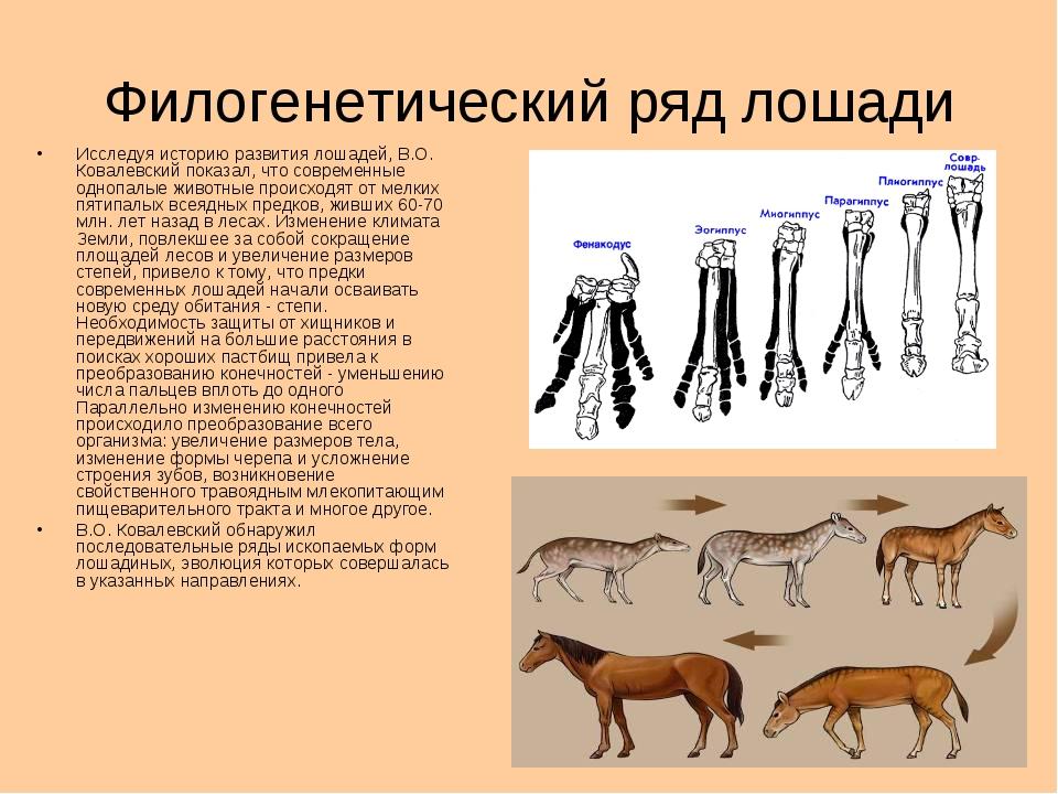 1.наука,изучающая ископаемые организмы 2.ученый,изучавший историю развития лошадей 3процесс формирования крупных систематических групп 4.как называются