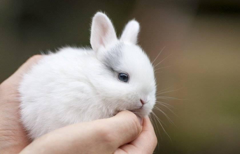 Дрессировка карликового кролика в домашних условиях: правила обучения, команды и игры с животным