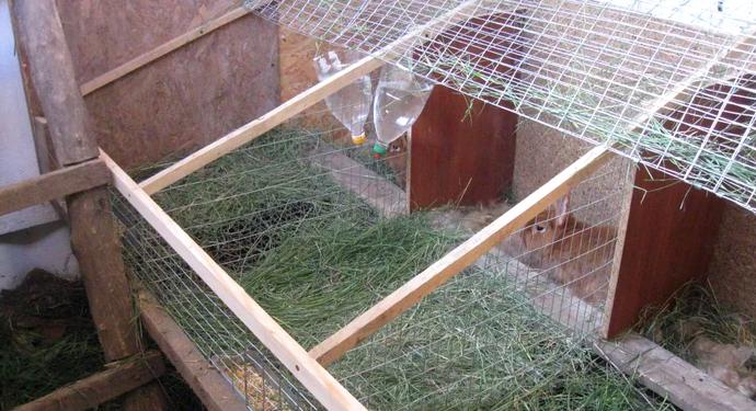 Вольер для кроликов - как сделать своими руками для комфортоного содержания