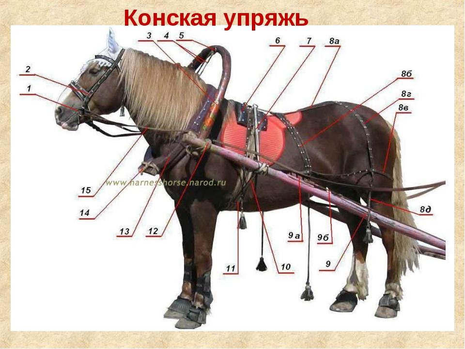 Упряжь для рабочих лошадей — основные элементы