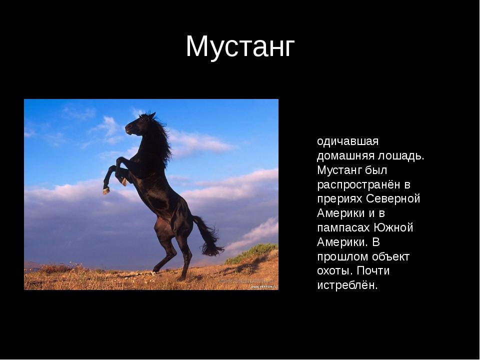 Мустанг лошадь: история и образ жизни — cельхозпортал
