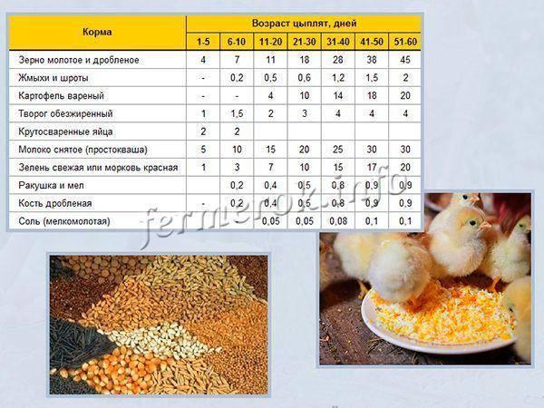Кормление цыплят до месяца и после: какой уход обеспечить в домашних условиях, вид корма и норма в зависимости от возраста для бройлерной птицы