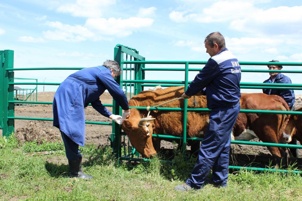 ✅ о поилках для крупного рогатого скота (крс) своими руками: пошаговая инструкция - tehnomir32.ru