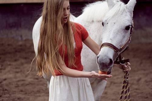 Чего бояться лошади и как их приучить не бояться