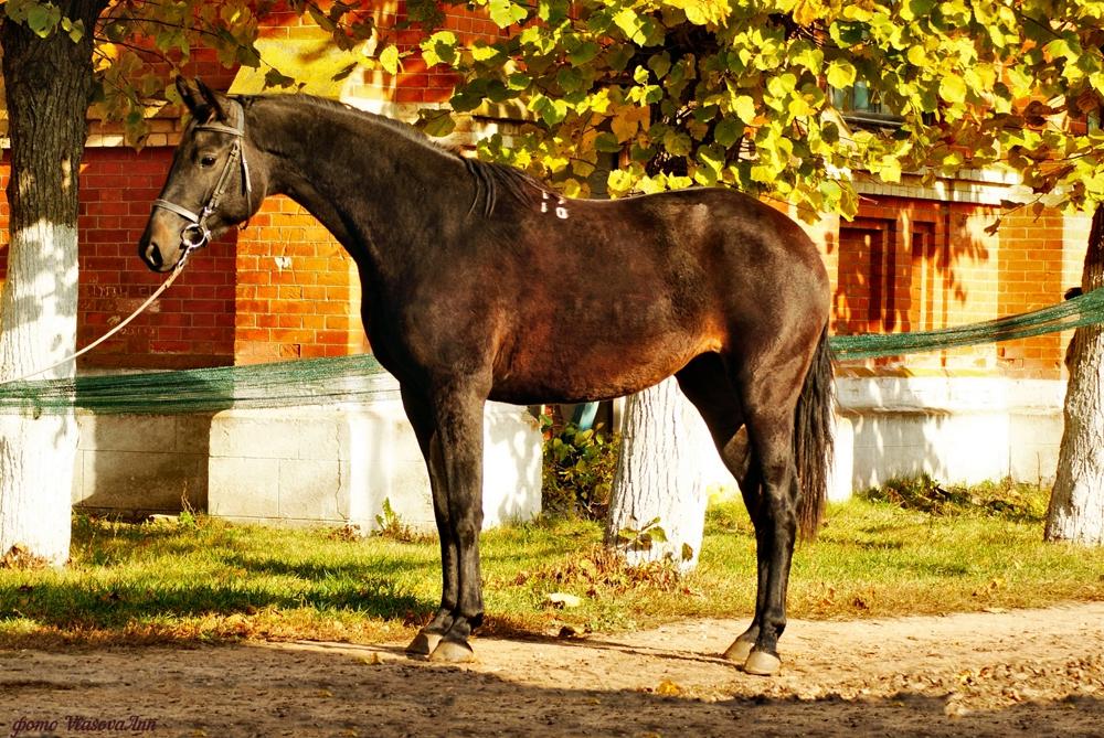 Алтайская порода лошадей: характеристика, содержание и уход