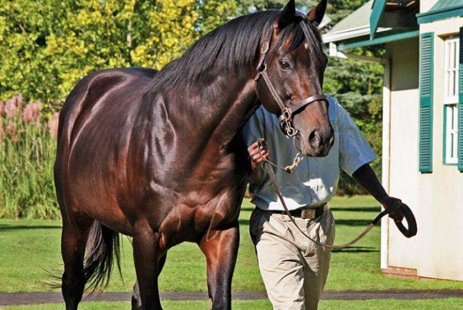 Самые дорогие лошади в мире: цена, фото
