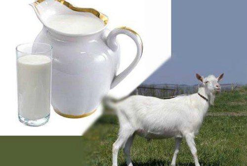 Лошадиное молоко