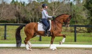 С какой скоростью бегает скаковая лошадь, рекорды на скачках