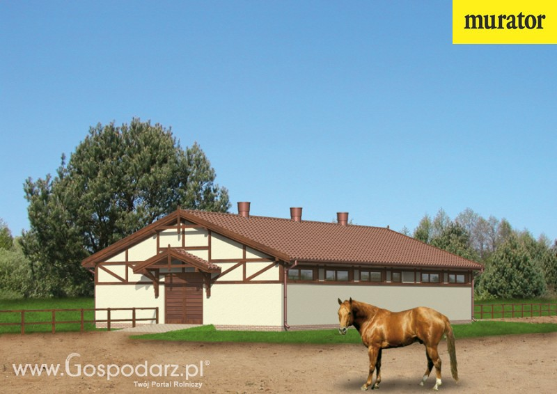 Содержание лошадей в конюшне | конный портал