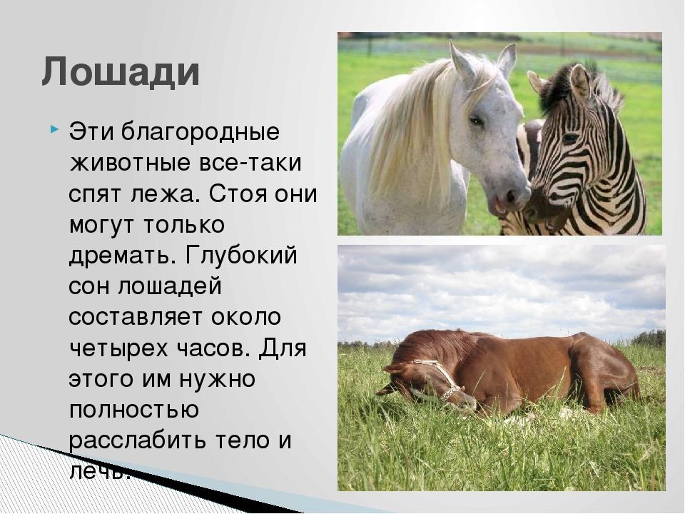 Особенности и причины сна животных в положении стоя