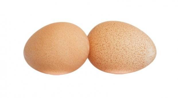 Как отличить самку цесарки от самца? 18 фото чем отличается по внешнему виду цесарь от цесарки? как определить пол птиц?