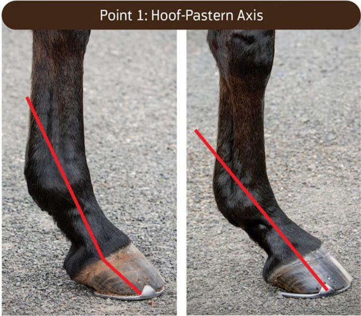 Болезни копыт у лошадей   блог анатолия кузнецова