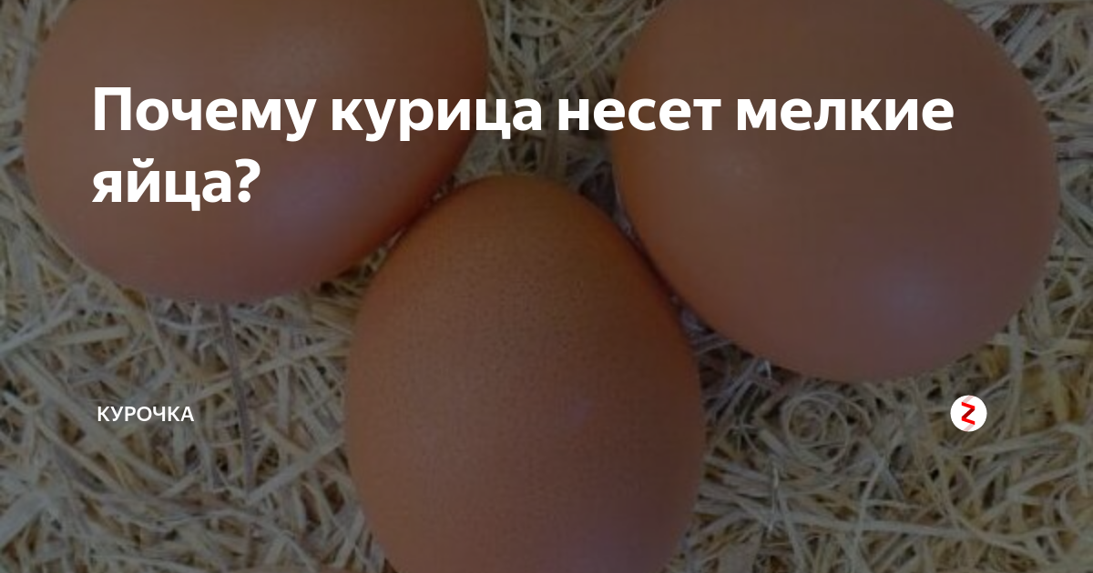 Почему куры несут яйца без скорлупы и что делать в таком случае?
