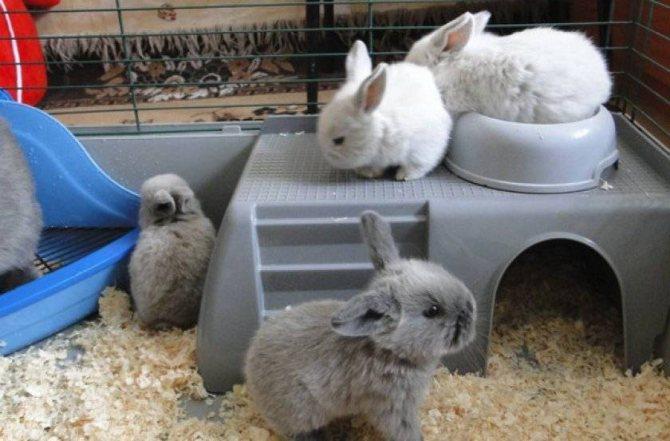 Что делать если, кролик грызет клетку - постройки