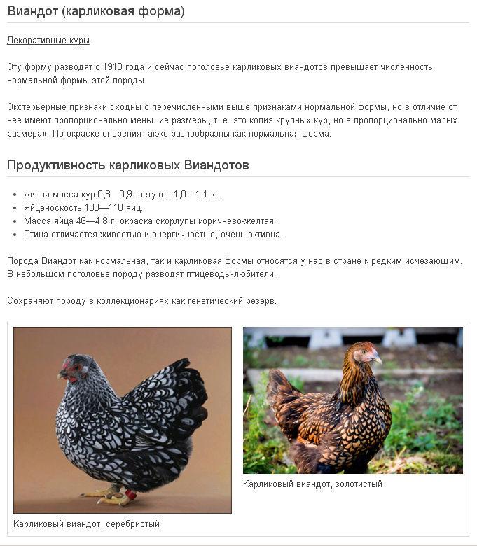 ✅ о курах австралорп: характеристики породы, разведение, содержание поголовья - tehnomir32.ru