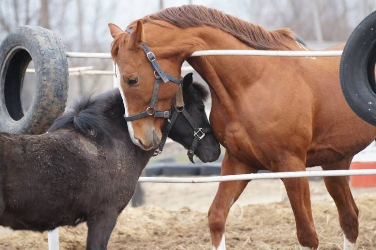 Распространённые заболевания лошадей и жеребят, их симптомы и способы лечение
