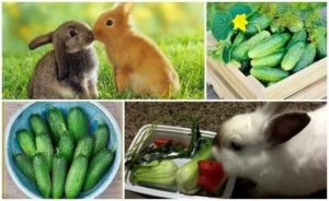 Можно ли давать соль кроликам: как правильно и в каких количествах